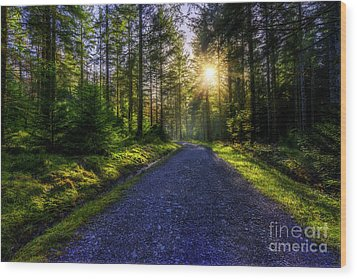 Wood Print featuring the photograph Forest Sunlight by Ian Mitchell