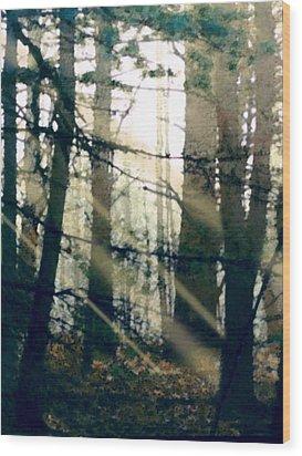 Forest Sunrise Wood Print by Paul Sachtleben