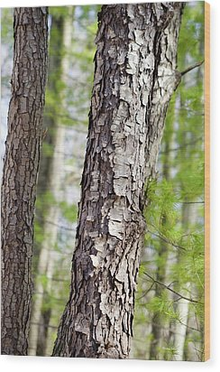 Wood Print featuring the photograph Forest Trees by Christina Rollo
