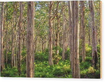 Wood Print featuring the photograph Forest Twilight, Boranup Forest by Dave Catley
