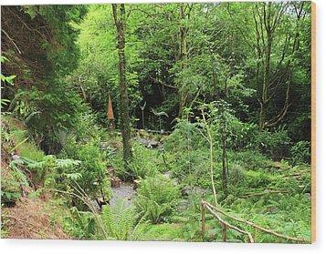 Forest Walk Wood Print by Aidan Moran