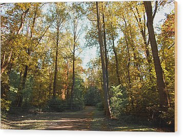 Forest Walk Wood Print by Joseph G Holland