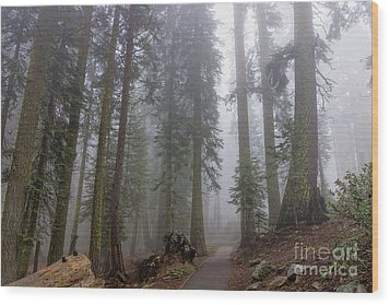 Wood Print featuring the photograph Forest Walking Path by Peggy Hughes