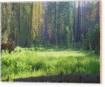 Foresta Wood Print