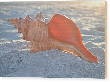 Wood Print featuring the photograph Forever Sanibel by Melanie Moraga