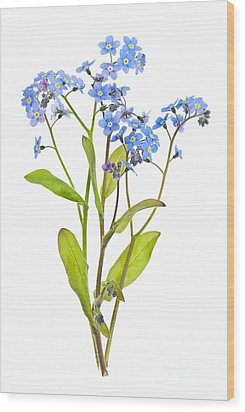 Forget-me-not Flowers On White Wood Print by Elena Elisseeva