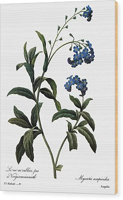 Forget-me-not Wood Print by Granger