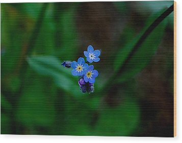 Forget Me Not  Wood Print by Marilynne Bull