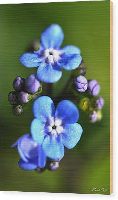 Forget-me-not Wood Print by Noah Cole