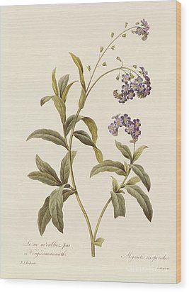 Forget Me Not Wood Print by Pierre Joseph Redoute