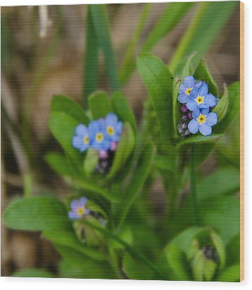 Forget Me Not Softly Wood Print