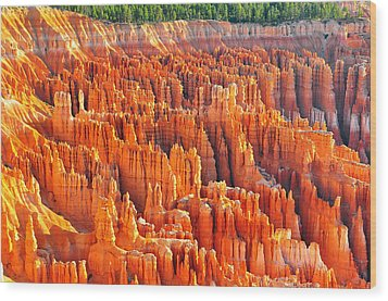 Formations At Bryce Canyon Ampitheater Wood Print by Jay Mudaliar