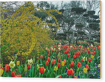 Wood Print featuring the photograph Forsythia Tulips And Daffadils by Diana Mary Sharpton