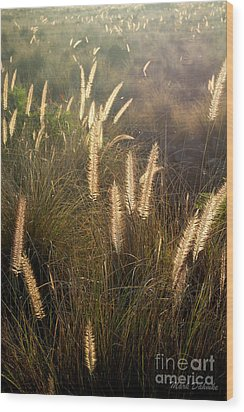 Fountain Grass Wood Print