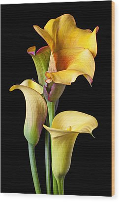 Four Calla Lilies Wood Print by Garry Gay