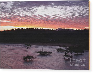 Wood Print featuring the photograph Four Elements Sunset Sequence 8 Coconuts Qld  by Kerryn Madsen - Pietsch