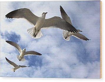 Four Gulls Wood Print
