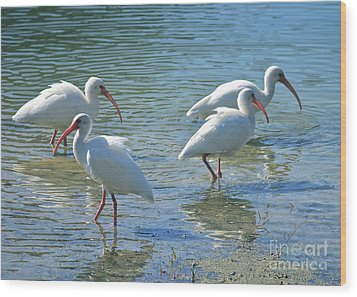 Four Ibises Wood Print by Carol Groenen