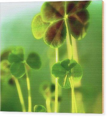 Four Leaf Clover Wood Print by Bonnie Bruno