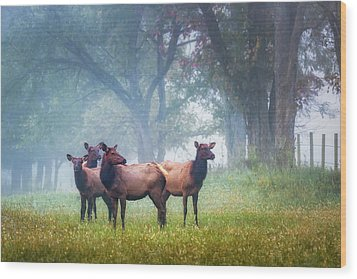 Wood Print featuring the photograph Four Of A Kind by James Barber