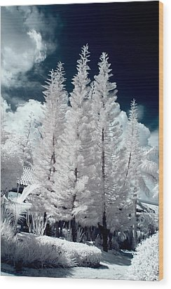 Four Tropical Pines Infrared Wood Print by Adam Romanowicz