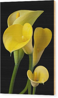Four Yellow Calla Lilies Wood Print by Garry Gay