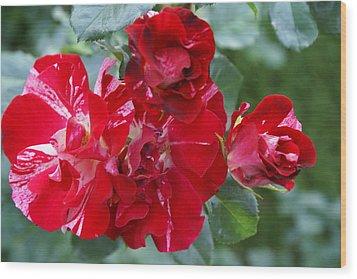 Fourth Of July Roses Wood Print by Jacqueline Russell