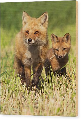 Fox Family Wood Print by Mircea Costina Photography