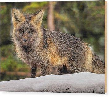 Fox Hunting In The Snow Wood Print by Paul W Sharpe Aka Wizard of Wonders