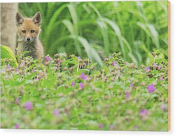 Fox In The Garden Wood Print by Everet Regal