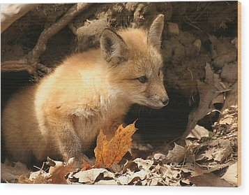 Wood Print featuring the photograph Fox Kit At Entrance To Den by Doris Potter