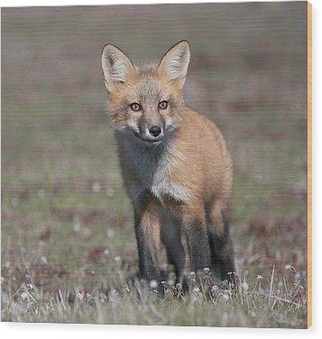 Wood Print featuring the photograph Fox Kit by Elvira Butler