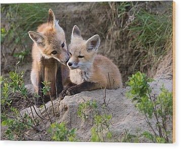 Fox Kits Canada Wood Print by Mark Duffy