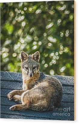 Fox On Roof Wood Print