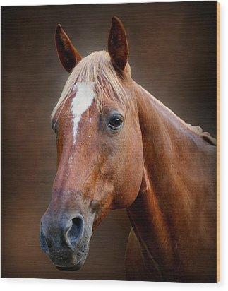 Fox - Quarter Horse Wood Print