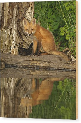 Fox Reflection Wood Print by James Peterson