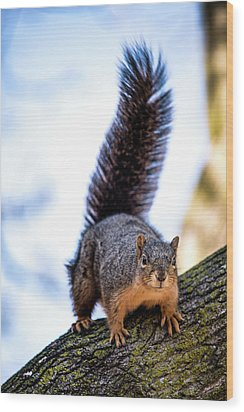 Wood Print featuring the photograph Fox Squirrel On Alert by Onyonet  Photo Studios