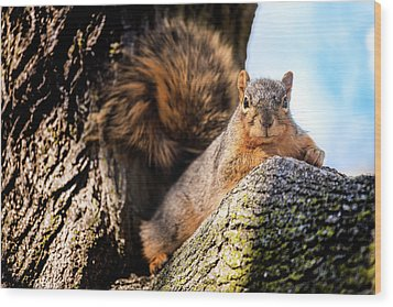Wood Print featuring the photograph Fox Squirrel Watching Me by Onyonet  Photo Studios