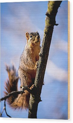 Wood Print featuring the photograph Fox Squirrel's Last Look by Onyonet  Photo Studios