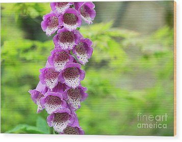 Wood Print featuring the photograph Foxglove Flowering by Tim Gainey