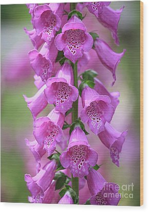 Wood Print featuring the photograph Foxglove Flowers by Edward Fielding