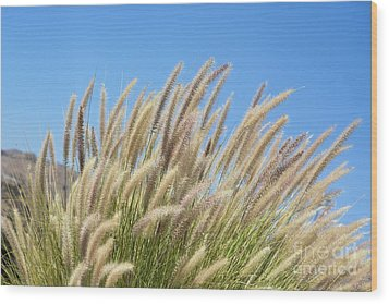 Foxtails On A Hill Wood Print