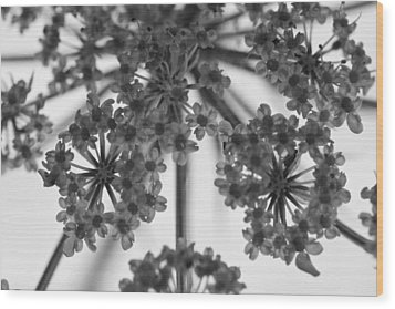 Fractal Flower Photoset 02 Wood Print by Ryan Kelly