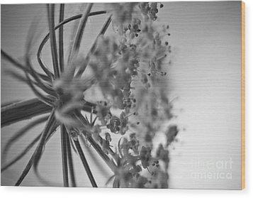Fractal Flower Photoset 03 Wood Print by Ryan Kelly