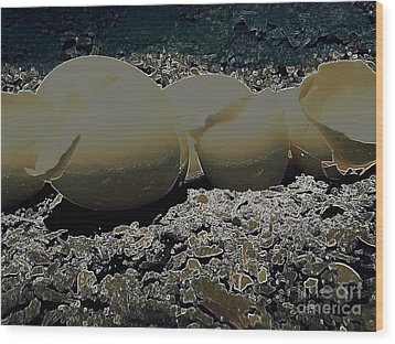 Wood Print featuring the photograph Fragile Waters by Kristine Nora