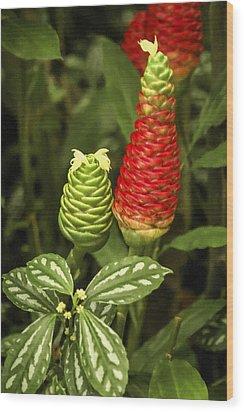 Fragrant Red Wood Print by Carolyn Marshall
