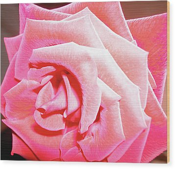 Wood Print featuring the photograph Fragrant Rose by Marie Hicks