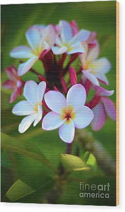 Wood Print featuring the photograph Fragrant Sunset by Kelly Wade