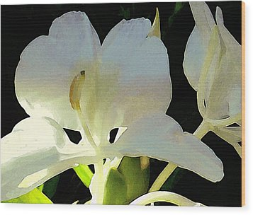Fragrant White Ginger Wood Print by James Temple