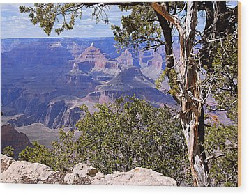 Framed View - Grand Canyon Wood Print by Larry Ricker